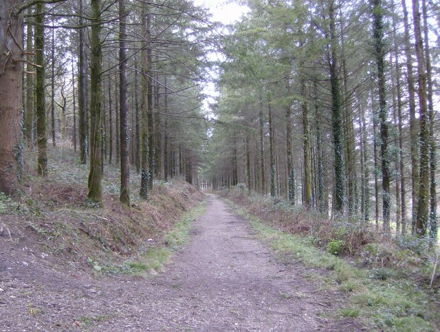 Track through High Wood Forest