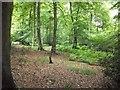 SU8598 : Piggotts Wood by michael