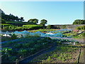 SH6134 : Kitchen gardens in the Maes-y-Neuadd hotel grounds by Richard Law
