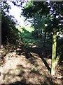 TL4500 : Public footpath near Epping by Malc McDonald