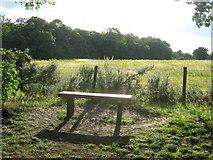TQ4468 : Bench in the sunlight by David Anstiss