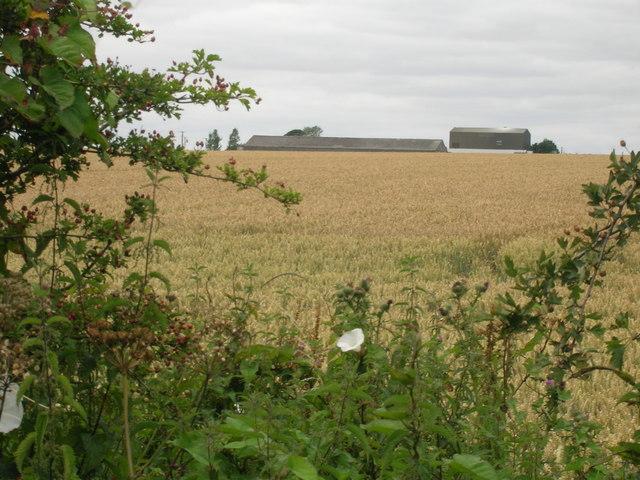 Farmland towards Northwold Farm