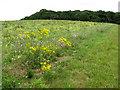 TF8641 : The edge of Scarboro' Wood, Burnham Thorpe by Evelyn Simak
