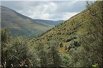 NT1512 : Forest regeneration, Carrifran by Jim Barton
