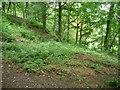 SE1427 : Steep woodland, Judy Woods by Christine Johnstone