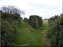 TM4159 : Footpath junction of the footpaths to the B1121 Aldeburgh Road by Adrian Cable