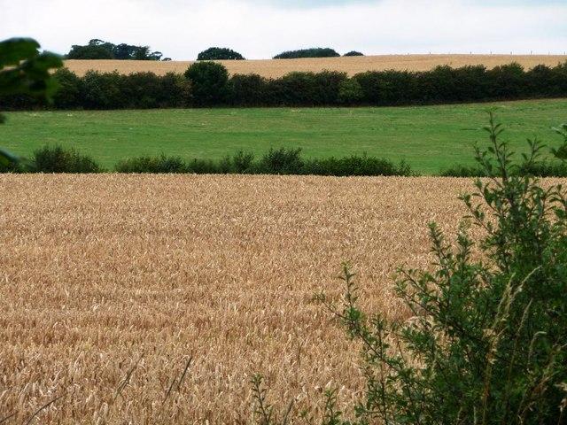 Fields west of Bretton Lane