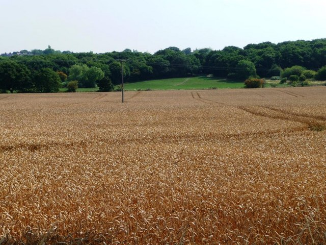 Wheatfield in front of Ryhill Pits