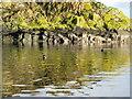 NR9894 : Eilean Aoghainn and seals by Martin Jones