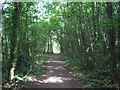TQ4363 : London Loop in Cuckoo Wood by David Anstiss