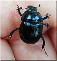NN7822 : Beetle by Anne Burgess