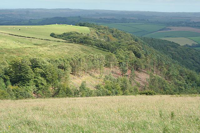 West Buckfastleigh: Wallaford Down and Larkham Wood