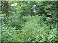 SO3220 : Very overgrown footpath near Llanvihangel Crucorney by John Light