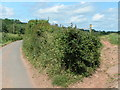 ST6063 : Lane and public footpath cross here by Rob Purvis