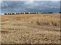 NT6015 : Barley field above Fodderlee Syke by Oliver Dixon