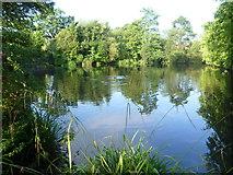 TQ4666 : Priory Gardens, Orpington by Marathon