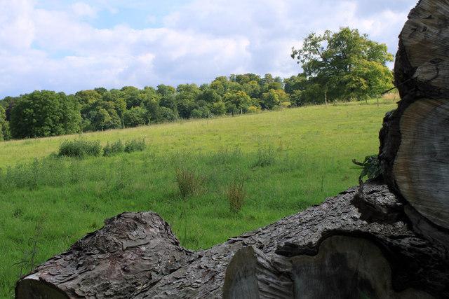 2011 : Corner of a log pile near Boyton