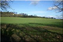 NZ3335 : Farmland, Coxhoe by David Robinson