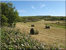 G6650 : Hay bales by Jonathan Wilkins