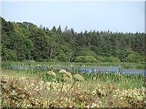 NT5682 : The loch, Balgone by Richard Webb