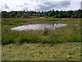 NZ1353 : Pond near Billingside Wood by Robert Graham