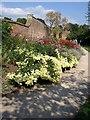 SE5158 : Main Border, Beningbrough Hall gardens by Derek Harper