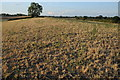 SO8740 : Arid farmland near Ryall by Philip Halling