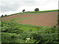 SX8055 : Patchy germination by Robin Stott