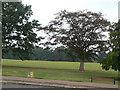 SP7761 : Abington Park by Alan Murray-Rust