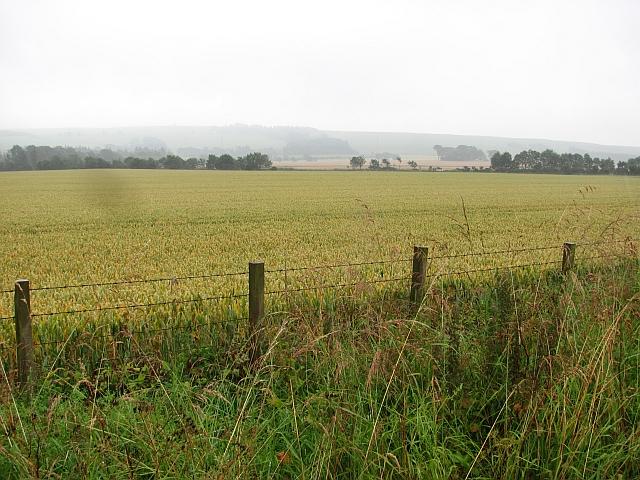 Wheat field, Laurencekirk
