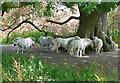 SU7975 : Ponies near Stanlake Bridge by Graham Horn