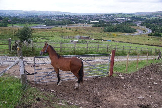 Horse guarding the gate