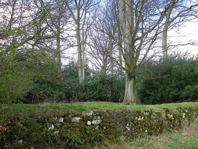 Moss on the wall, Ilton