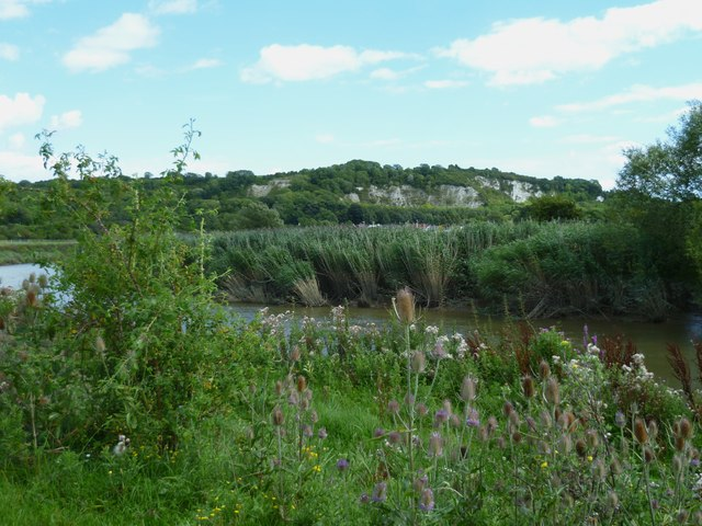 Reed banks along the Arun near Houghton Bridge