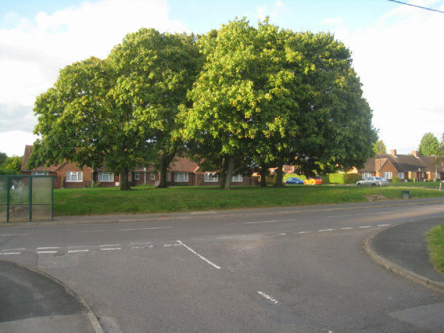 Clump of trees - Hill Road