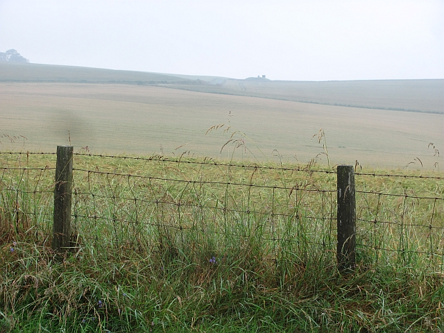 Barley field, Snawdon