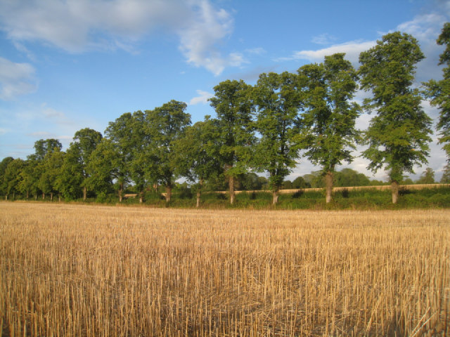 Stubble and trees - Oakley