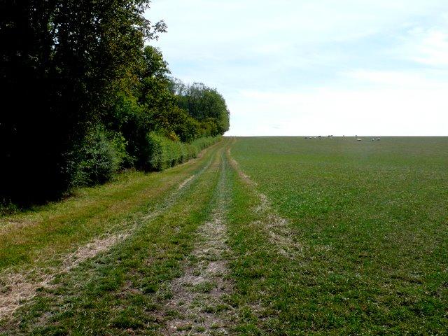 Farm Track at Crimscote Fields