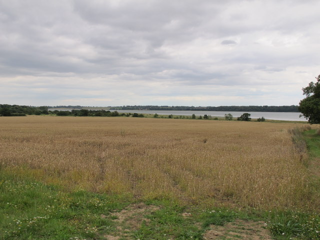 Cornfield near the river