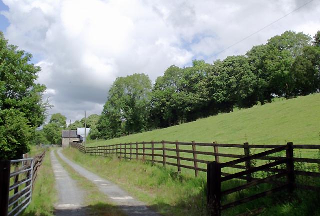 Farm road and pasture near Llangybi, Ceredigion