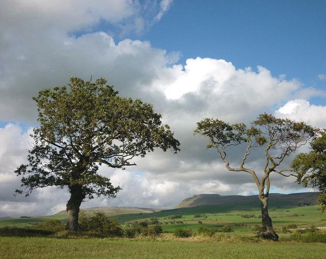 Trees and Ingleborough
