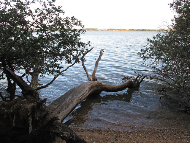 Dead Tree in the Water
