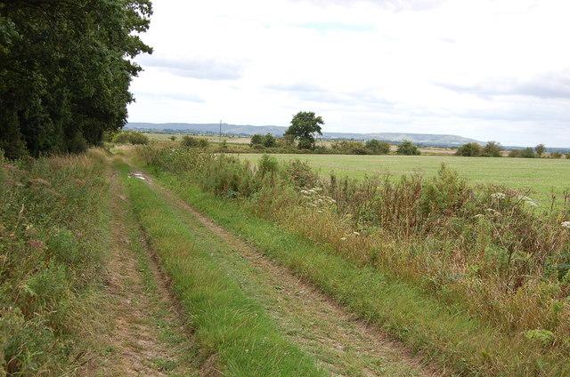Farm track off the 1066 Walk