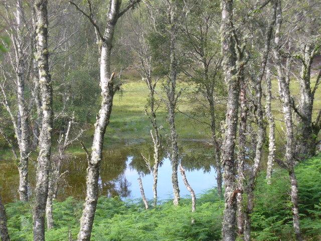 Pool by Loch Kinord Trail