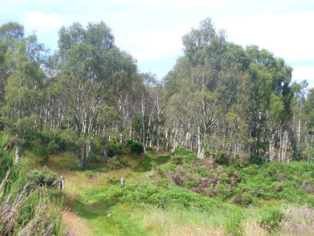 Woodland by Bogingore