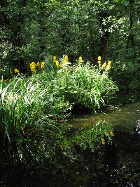 Fairhaven Water Garden, South Walsham