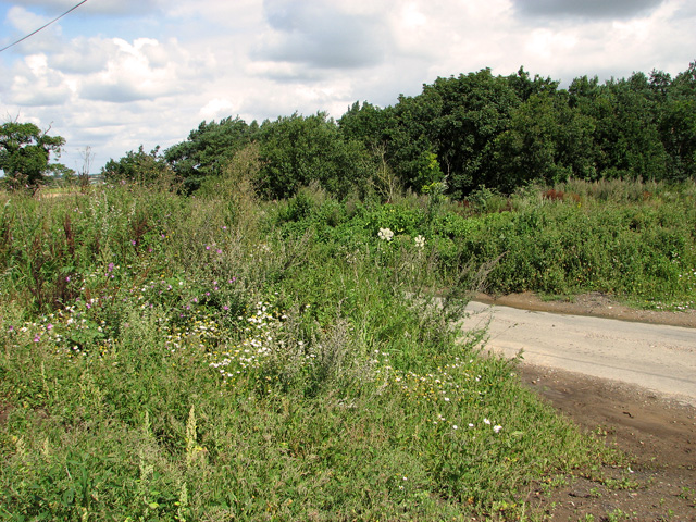 Disused sand pit beside Church Road
