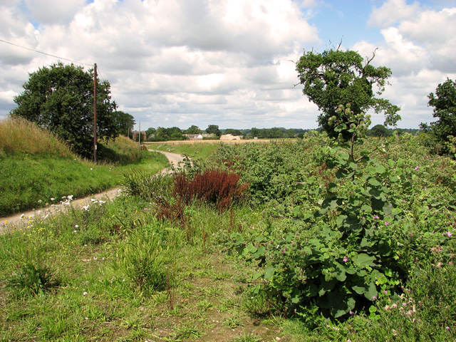 Fields beside Church Road, Repps with Bastwick