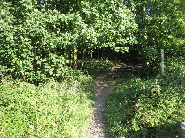 Path through Pit Hills Plantation