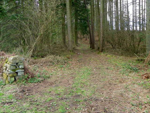 Track near Ilton